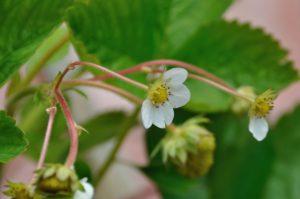 NOUVELLES NATURELLES DU BIZARDIN – «Les prairies fleuries» (novembre 2016)
