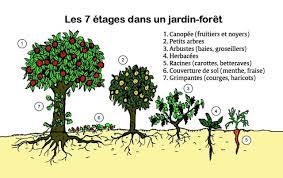 Le jardin-forêt